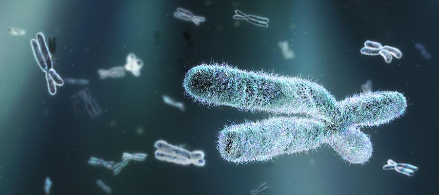 Chromosome-Cromosoma
